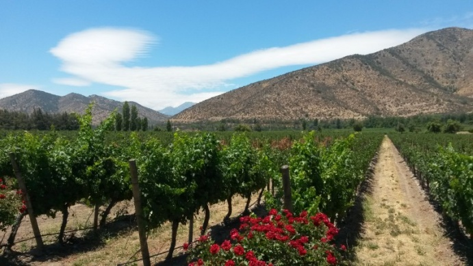 Santa Rita's winemakers are focused on the market needs of their customers