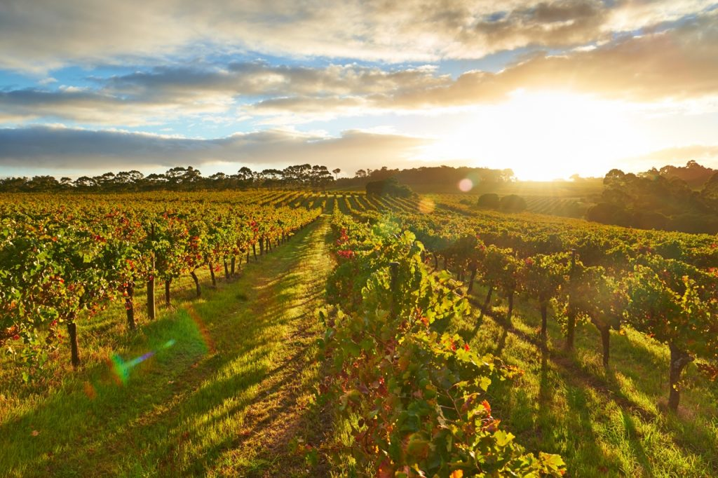 Coping with near year round sunshine is inspiring winemakers to make different styles of wine in Australia. Picture: Wine Australia