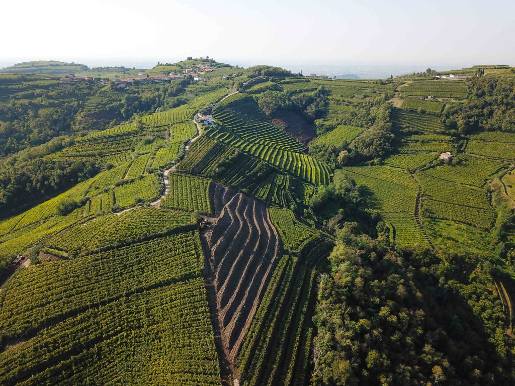 Biodiversity has become a major issue for Soave producers