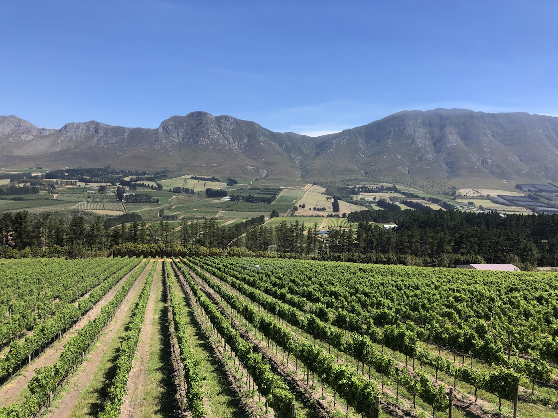Hemel en Aarde Chardonnay: just how good are these South African wines?