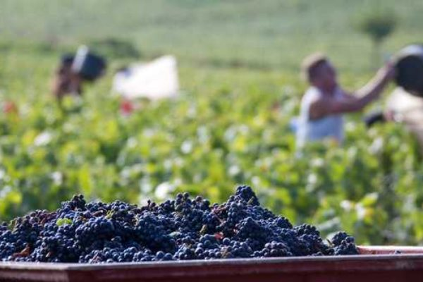 After some difficult harvests there are high hopes for the new Bourgogne wines on the market