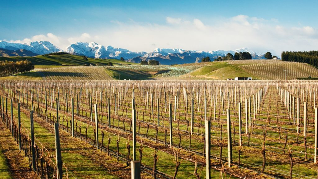 Marlborough will be appropriate venue for this month's Sauvignon 2019 event: Copyright owned by Jim Tannock 2010