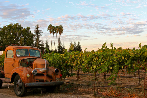 Lodi is full of fourth and fifth generation of growers whose families go back to the pioneering Gold Rush days