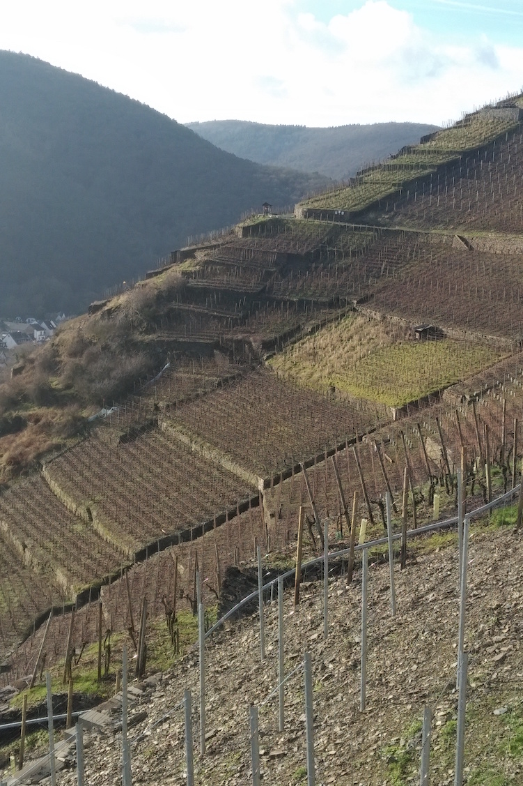 German wine: where has it been, where is it now and where is it going?