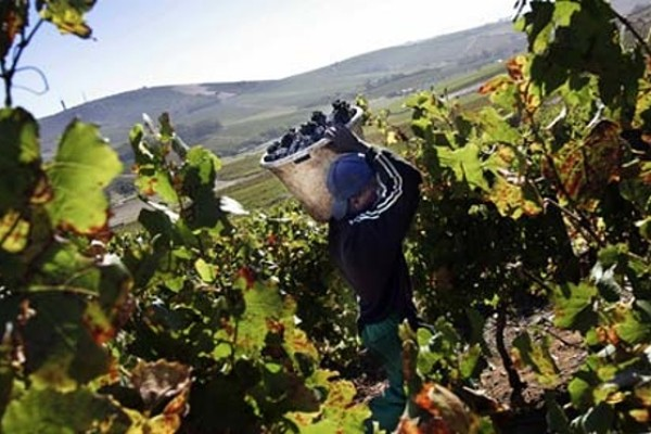 Workers rights are a paramount part of the South African wine sector