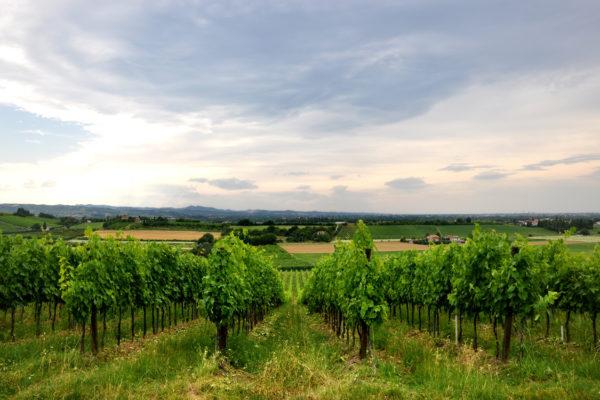 emilia-romagna-vineyards-landscape