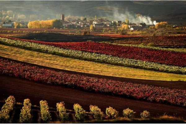 Rioja: the most well known and bought wine region in Spain