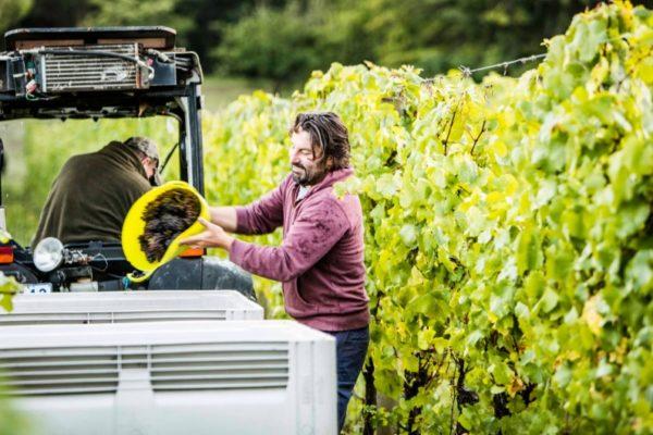 Sam Coverdale is dedicated to biodynamic farming at Polperro