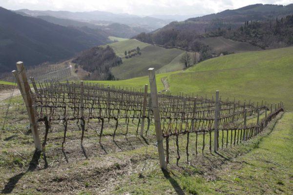 tramazzo vigne