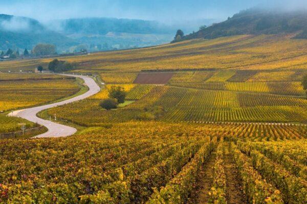 Burgundy 2019